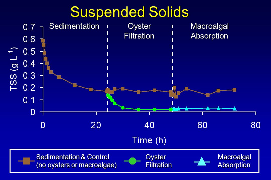 Suspended Solids Sedimentation & Control (no oysters or macroalgae) OysterFiltrationMacroalgalAbsorption Sedimentation Oyster Filtration MacroalgalAbsorption