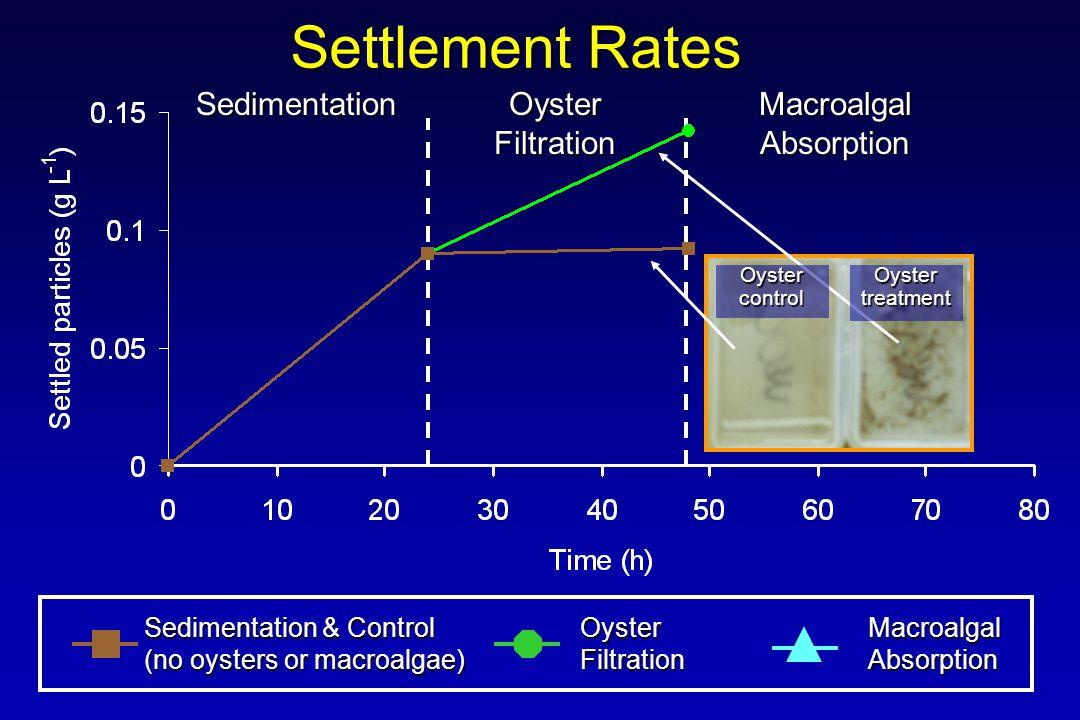 Settlement Rates Sedimentation & Control (no oysters or macroalgae) OysterFiltrationMacroalgalAbsorption Sedimentation Oyster Filtration MacroalgalAbsorption OystercontrolOystertreatment