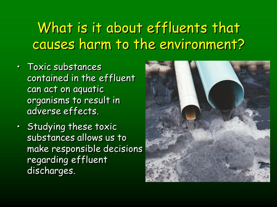 What is it about effluents that causes harm to the environment.