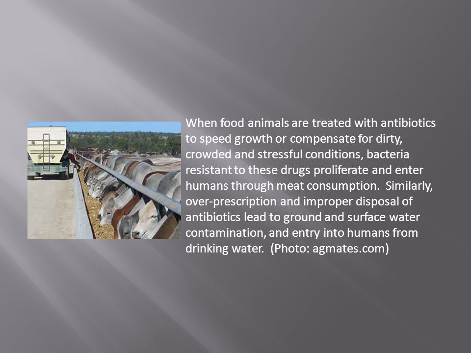 When food animals are treated with antibiotics to speed growth or compensate for dirty, crowded and stressful conditions, bacteria resistant to these drugs proliferate and enter humans through meat consumption.