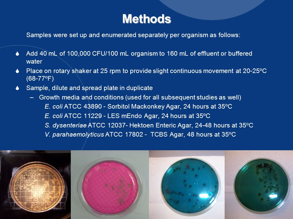 13Methods Samples were set up and enumerated separately per organism as follows:  Add 40 mL of 100,000 CFU/100 mL organism to 160 mL of effluent or buffered water  Place on rotary shaker at 25 rpm to provide slight continuous movement at 20-25ºC (68-77ºF)  Sample, dilute and spread plate in duplicate –Growth media and conditions (used for all subsequent studies as well) E.