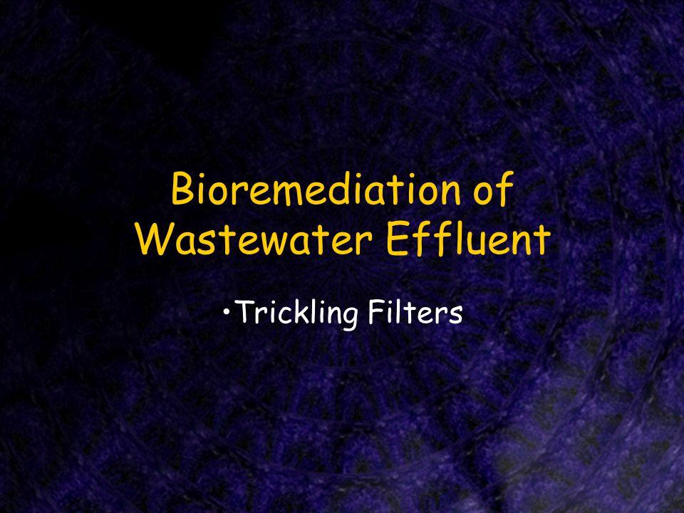 Bioremediation of Wastewater Effluent Trickling Filters