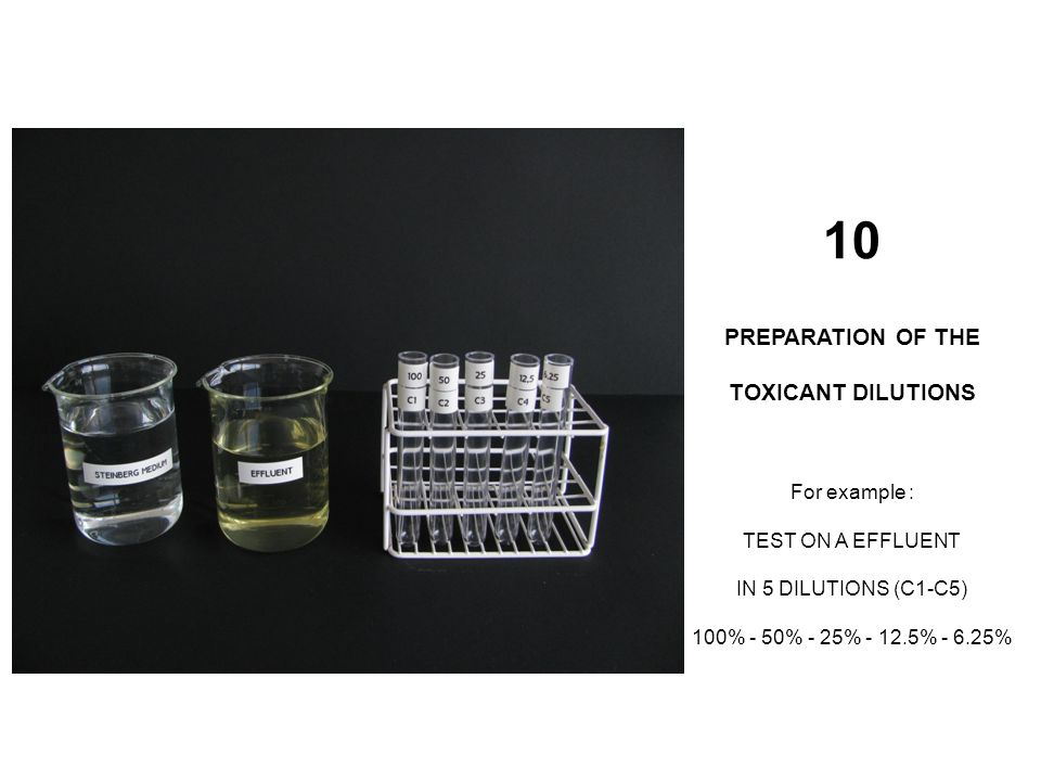 10 PREPARATION OF THE TOXICANT DILUTIONS For example : TEST ON A EFFLUENT IN 5 DILUTIONS (C1-C5) 100% - 50% - 25% - 12.5% - 6.25%