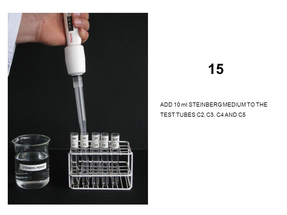 15 ADD 10 ml STEINBERG MEDIUM TO THE TEST TUBES C2, C3, C4 AND C5