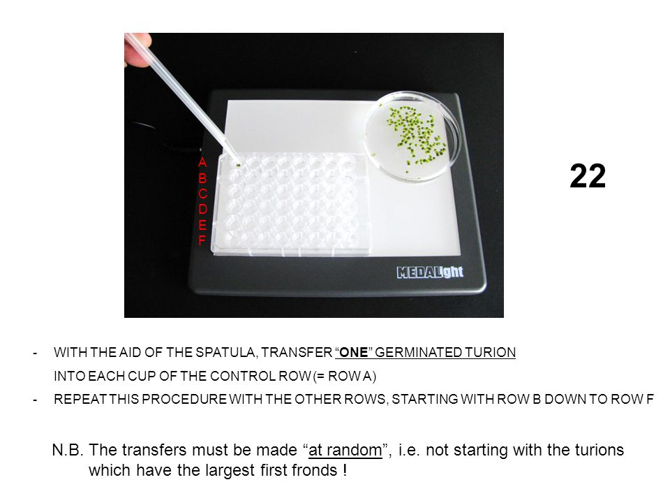 22 -WITH THE AID OF THE SPATULA, TRANSFER ONE GERMINATED TURION INTO EACH CUP OF THE CONTROL ROW (= ROW A) -REPEAT THIS PROCEDURE WITH THE OTHER ROWS, STARTING WITH ROW B DOWN TO ROW F ABCDEFABCDEF N.B.