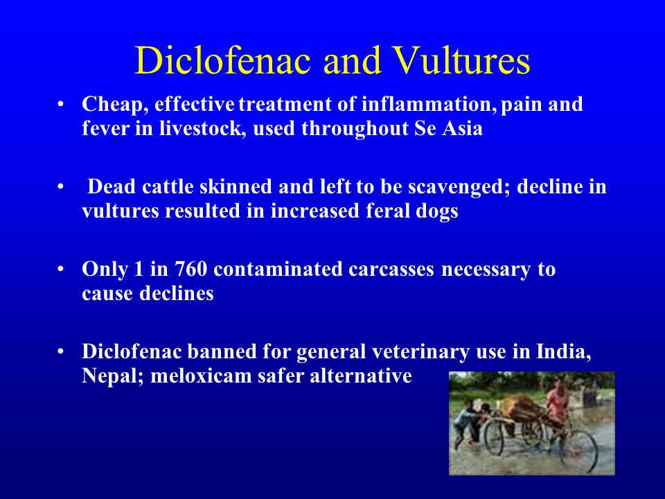 Diclofenac and Vultures Cheap, effective treatment of inflammation, pain and fever in livestock, used throughout Se Asia Dead cattle skinned and left