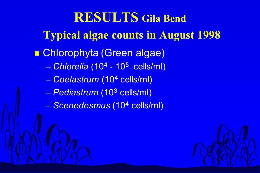 RESULTS Gila Bend Typical algae counts in August 1998 n Chlorophyta (Green algae) –Chlorella (10 4 - 10 5 cells/ml) –Coelastrum (10 4 cells/ml) –Pediastrum (10 3 cells/ml) –Scenedesmus (10 4 cells/ml)