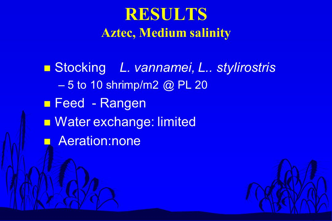 RESULTS Aztec, Medium salinity n Stocking L. vannamei, L.. stylirostris –5 to 10 shrimp/m2 @ PL 20 n Feed - Rangen n Water exchange: limited n Aeratio