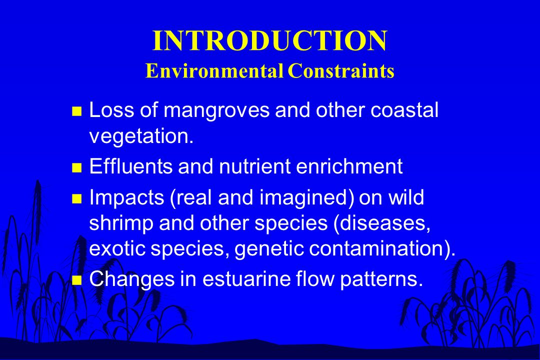 INTRODUCTION Environmental Constraints n Loss of mangroves and other coastal vegetation.
