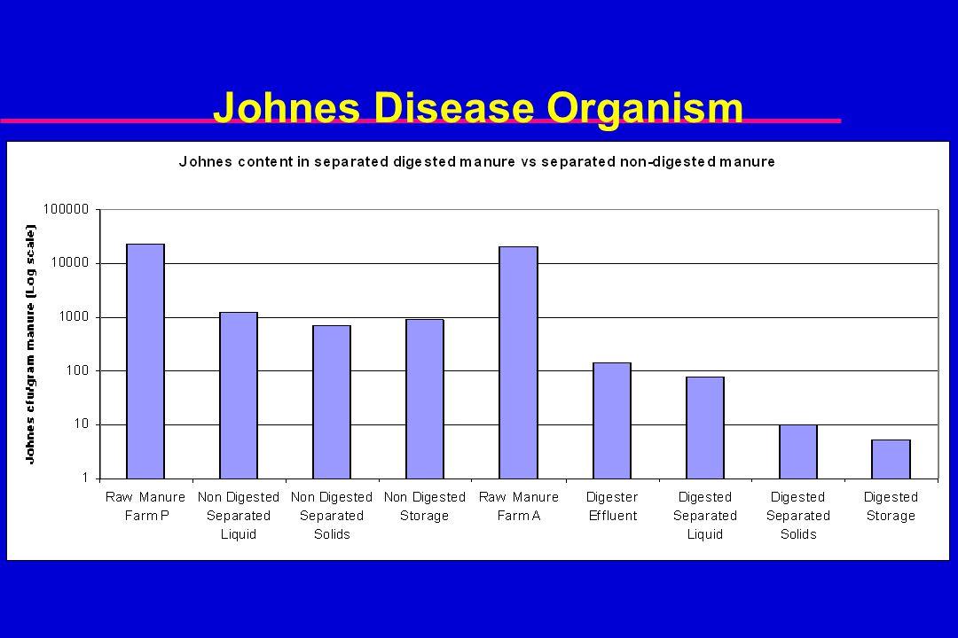Johnes Disease Organism