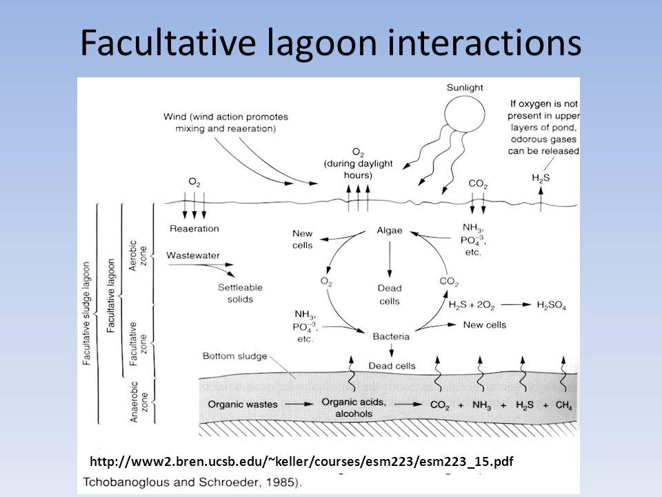 Facultative lagoon interactions http://www2.bren.ucsb.edu/~keller/courses/esm223/esm223_15.pdf
