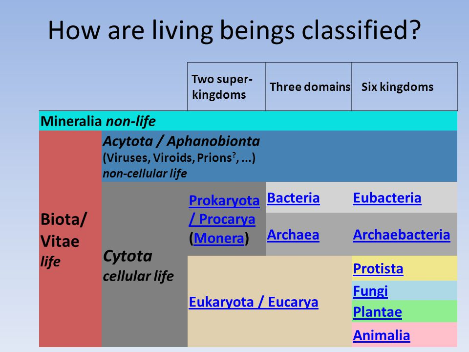 How are living beings classified.