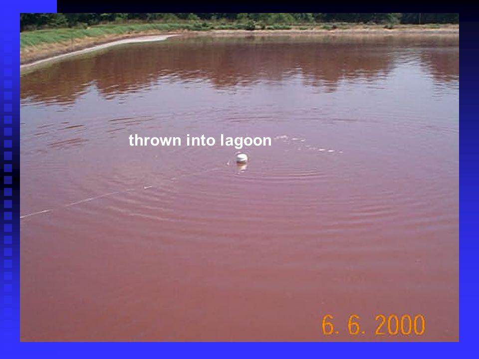 thrown into lagoon