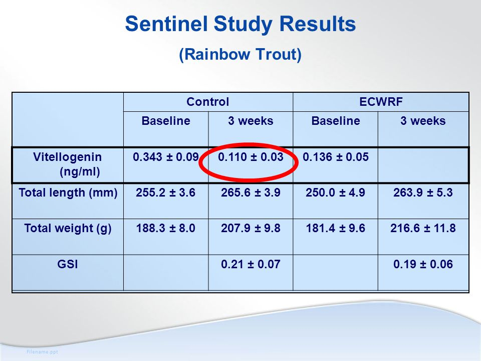 Filename.ppt Sentinel Study Results (Rainbow Trout) ControlECWRF Baseline3 weeksBaseline3 weeks Vitellogenin (ng/ml) 0.343 ± 0.090.110 ± 0.030.136 ± 0.05 Total length (mm)255.2 ± 3.6265.6 ± 3.9250.0 ± 4.9263.9 ± 5.3 Total weight (g)188.3 ± 8.0207.9 ± 9.8181.4 ± 9.6216.6 ± 11.8 GSI 0.21 ± 0.07 0.19 ± 0.06