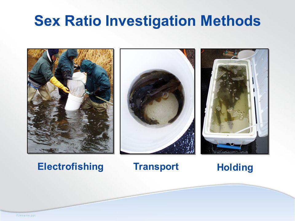 Filename.ppt Sex Ratio Investigation Methods ElectrofishingTransport Holding