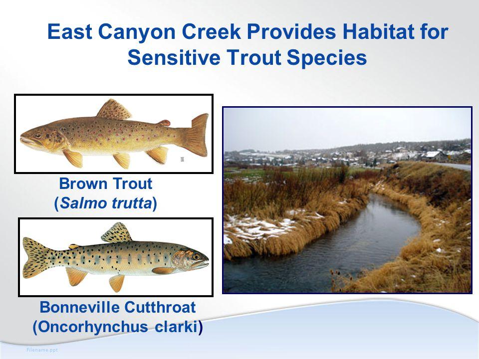 Brown Trout (Salmo trutta) Bonneville Cutthroat (Oncorhynchus clarki) East Canyon Creek Provides Habitat for Sensitive Trout Species