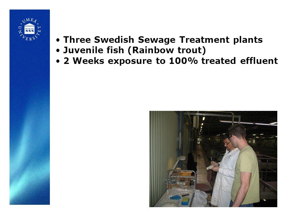 Three Swedish Sewage Treatment plants Juvenile fish (Rainbow trout) 2 Weeks exposure to 100% treated effluent