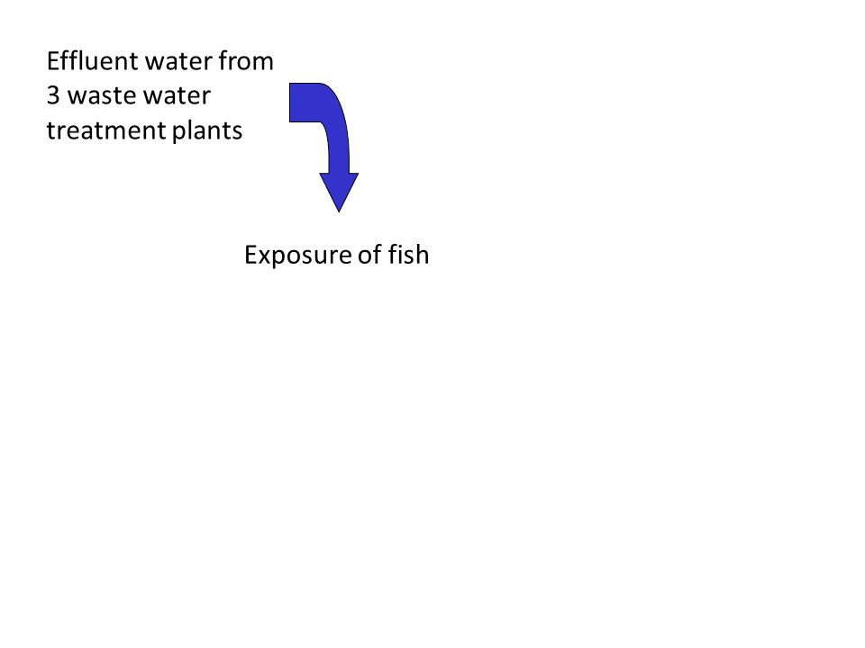 Effluent water from 3 waste water treatment plants Exposure of fish