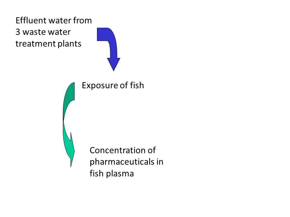 Effluent water from 3 waste water treatment plants Exposure of fish Concentration of pharmaceuticals in fish plasma