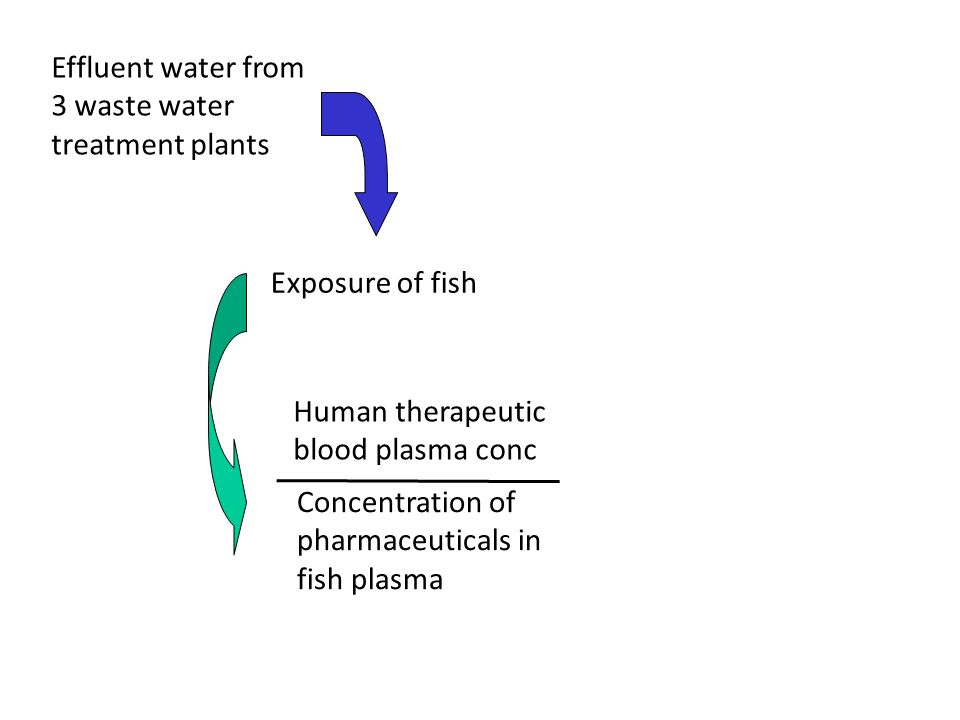 Effluent water from 3 waste water treatment plants Exposure of fish Concentration of pharmaceuticals in fish plasma Human therapeutic blood plasma conc