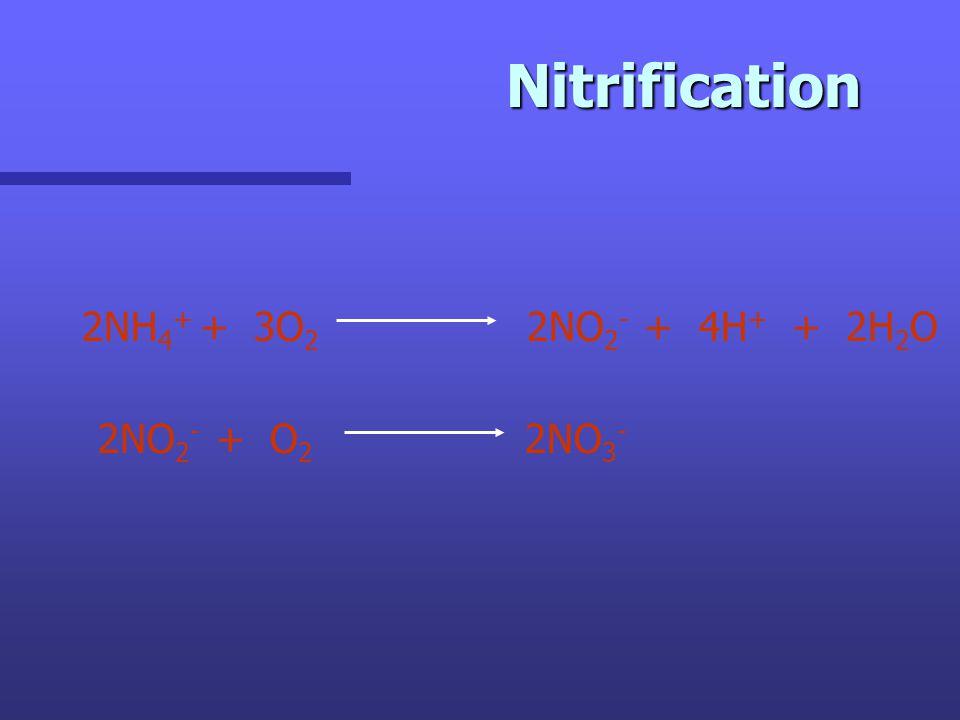 Nitrification 2NH 4 + + 3O 2 2NO 2 - + 4H + + 2H 2 O 2NO 2 - + O 2 2NO 3 -