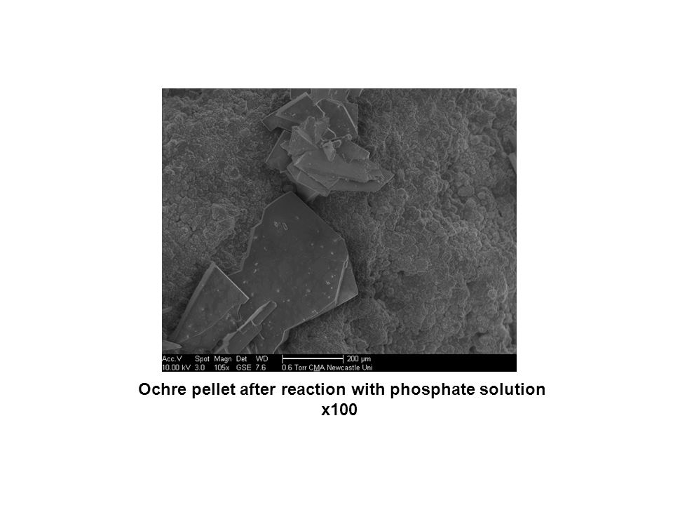 Ochre pellet after reaction with phosphate solution x100