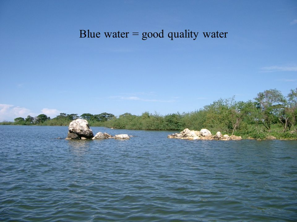 Green water = nutrient-enriched water