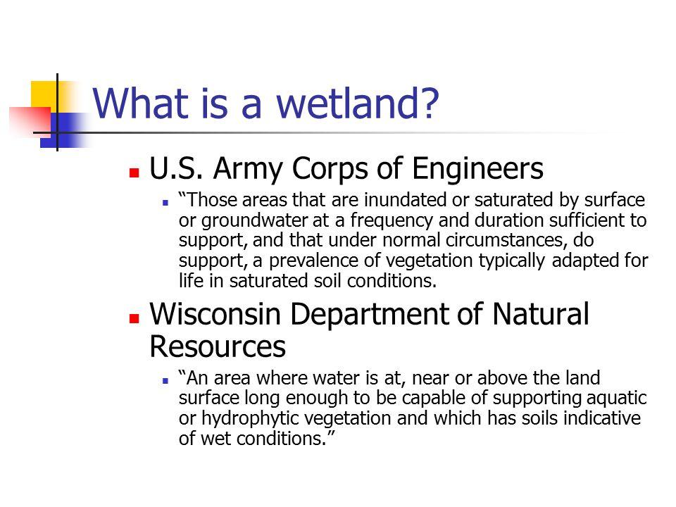 What is a wetland. U.S.