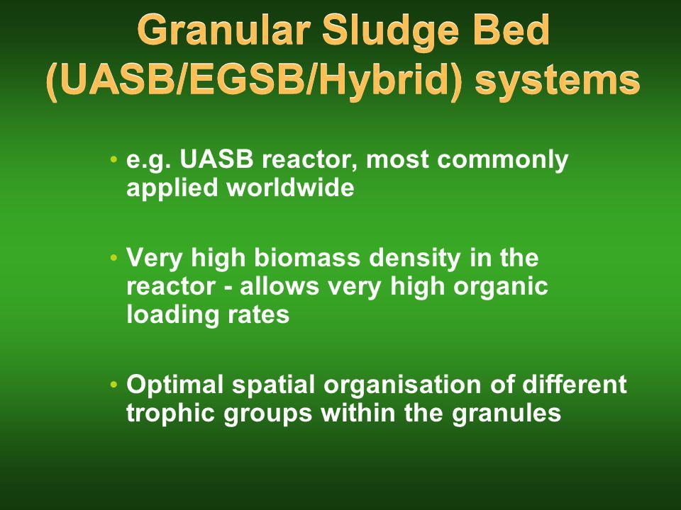 Granular Sludge Bed (UASB/EGSB/Hybrid) systems e.g.