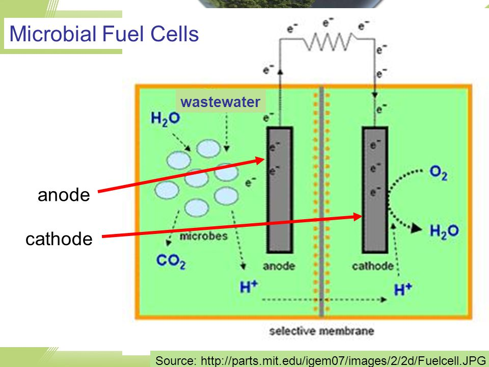 anode cathode Source: http://parts.mit.edu/igem07/images/2/2d/Fuelcell.JPG wastewater Microbial Fuel Cells