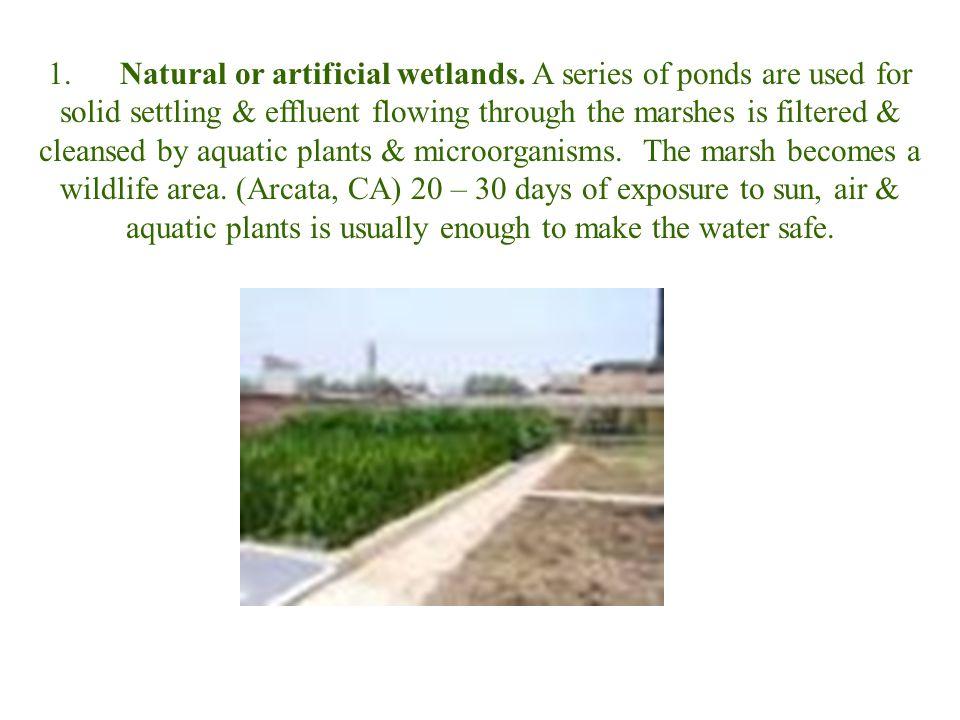 1.Natural or artificial wetlands.