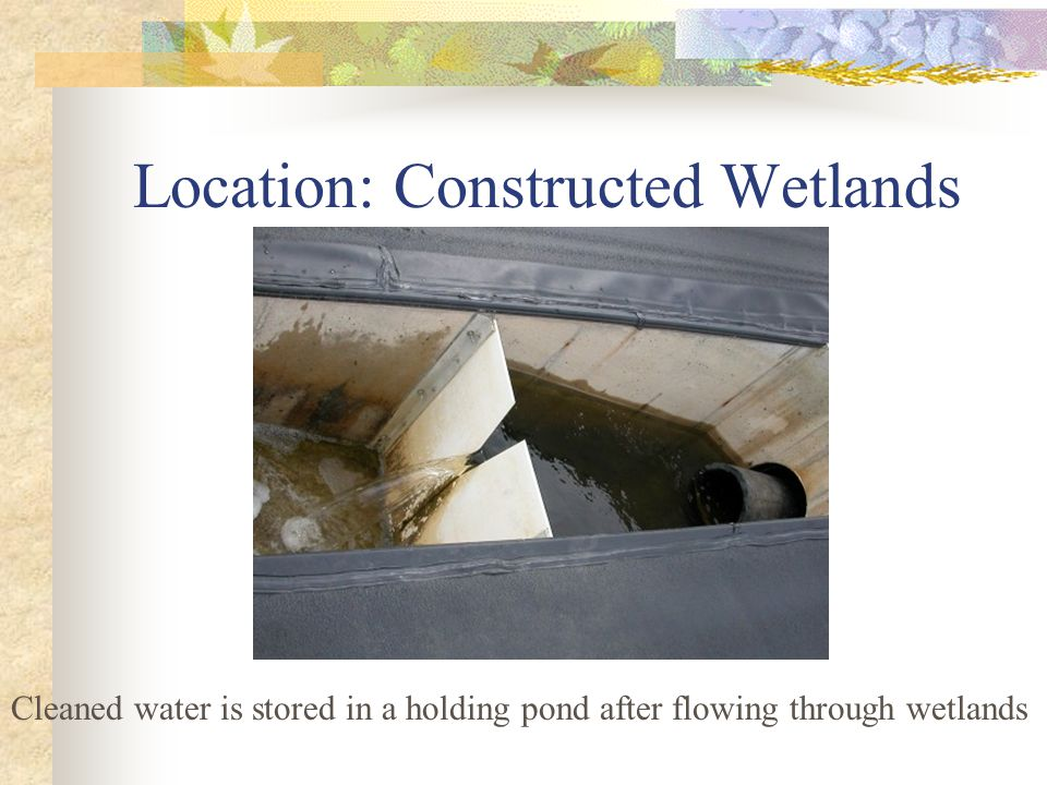 Location: Constructed Wetlands Cleaned water is stored in a holding pond after flowing through wetlands