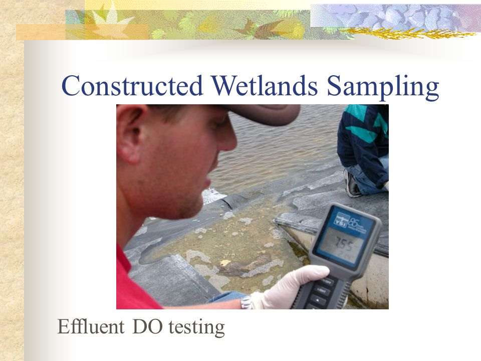 Constructed Wetlands Sampling Effluent DO testing