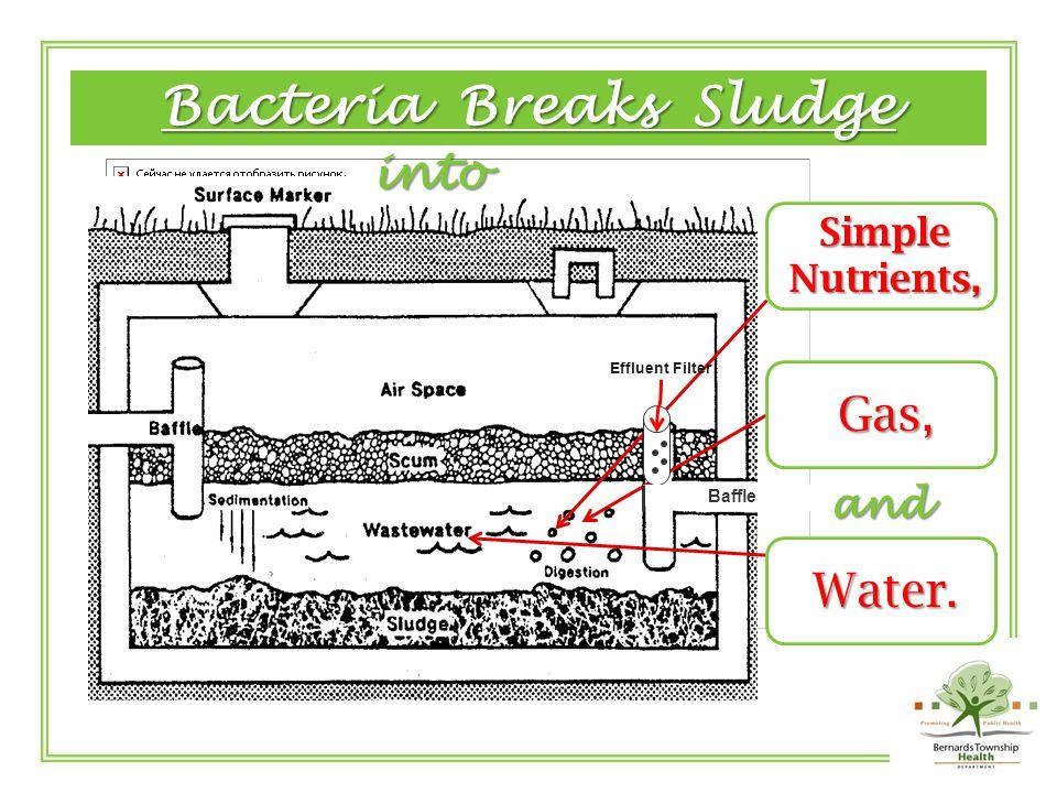 Grease Floats ◊ Solids Sink Grease + Fat = SCUM and SolidsSink=SLUDGE Effluent Filter Baffle