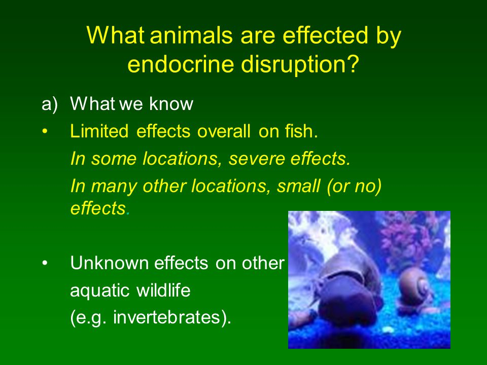 What animals are effected by endocrine disruption? a)What we know Limited effects overall on fish. In some locations, severe effects. In many other lo