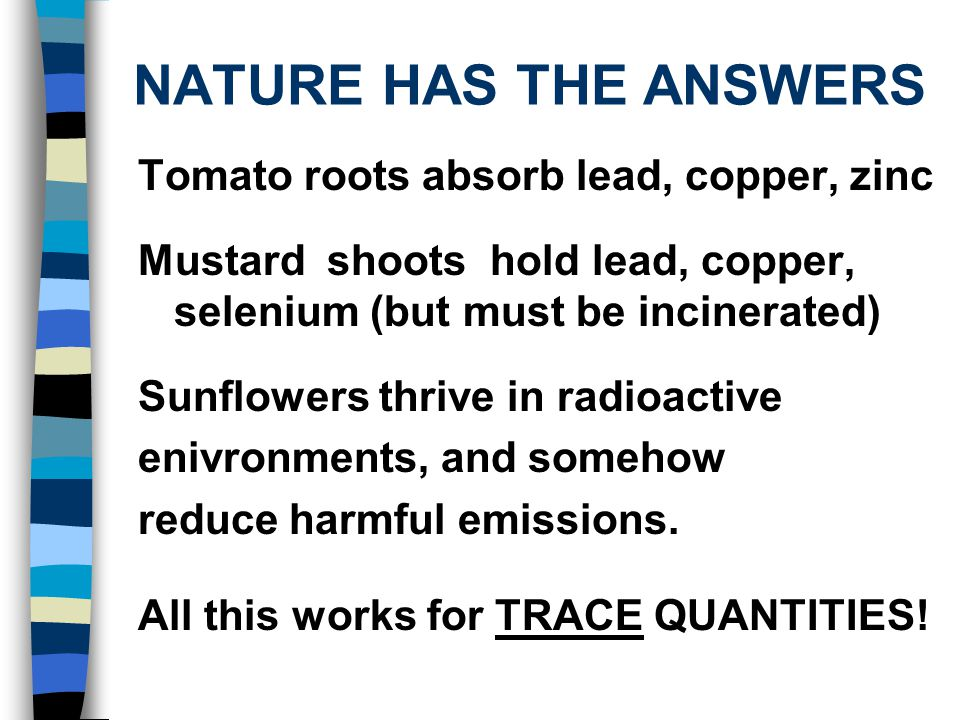 NATURE HAS THE ANSWERS Tomato roots absorb lead, copper, zinc Mustard shoots hold lead, copper, selenium (but must be incinerated) Sunflowers thrive in radioactive enivronments, and somehow reduce harmful emissions.