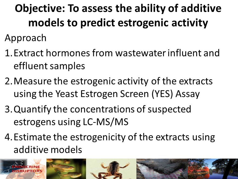 Approach 1.Extract hormones from wastewater influent and effluent samples 2.Measure the estrogenic activity of the extracts using the Yeast Estrogen Screen (YES) Assay 3.Quantify the concentrations of suspected estrogens using LC-MS/MS 4.Estimate the estrogenicity of the extracts using additive models Objective: To assess the ability of additive models to predict estrogenic activity 13