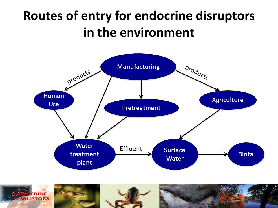 Endocrine disrupting activity is related to wastewater treatment Relative distance from water treatment plant 6