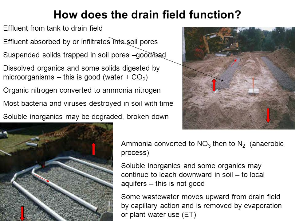 How does the drain field function.