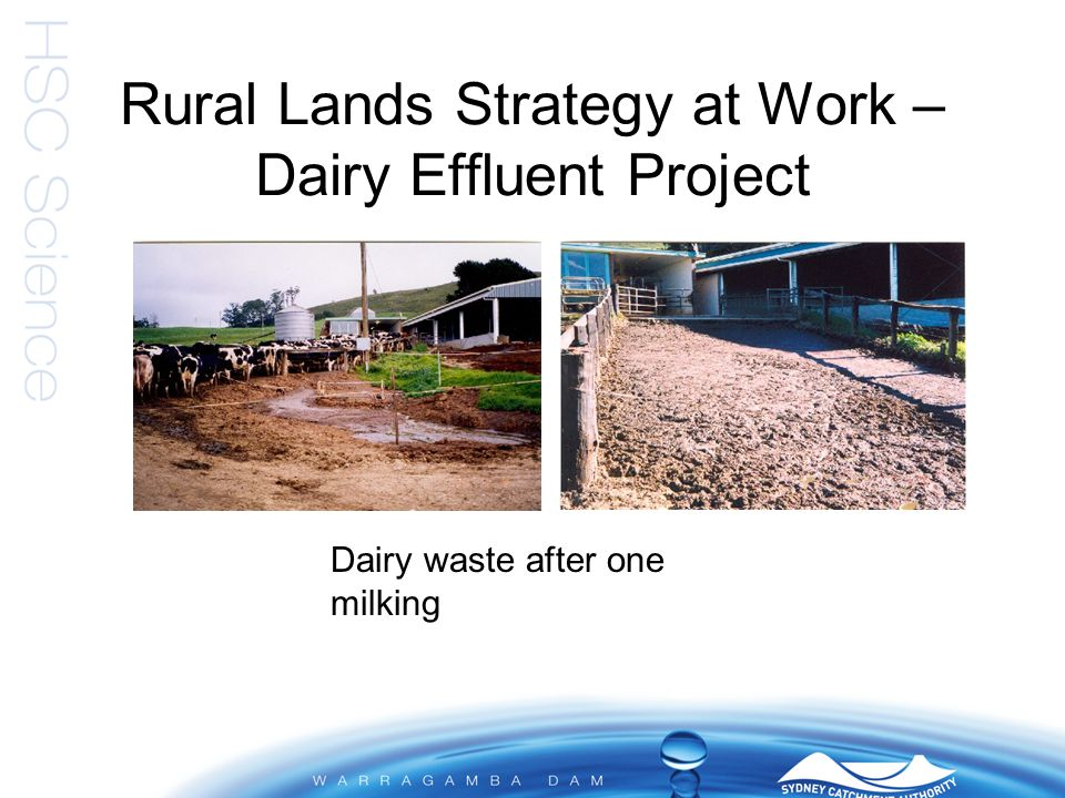 Rural Lands Strategy at Work – Dairy Effluent Project Dairy waste after one milking