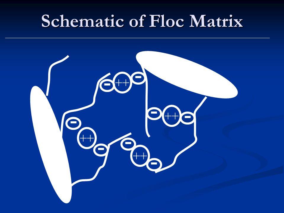 Schematic of Floc Matrix ++