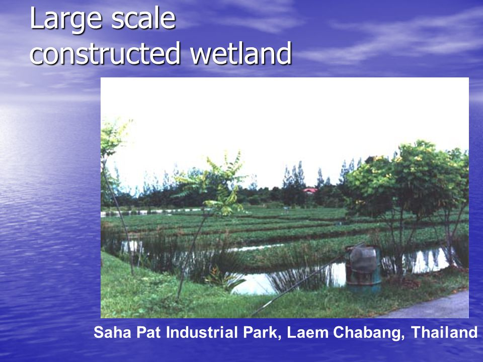 Large scale constructed wetland Saha Pat Industrial Park, Laem Chabang, Thailand