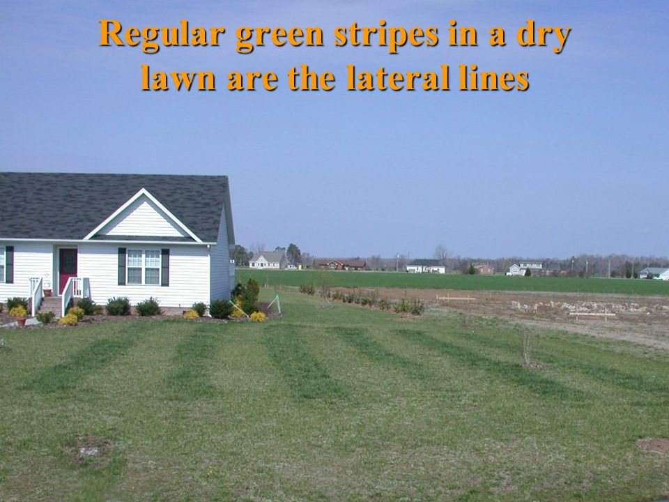 Regular green stripes in a dry lawn are the lateral lines