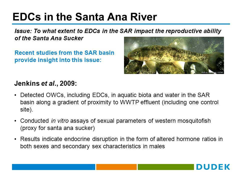 EDCs in the Santa Ana River Issue: To what extent to EDCs in the SAR impact the reproductive ability of the Santa Ana Sucker Jenkins et al., 2009: Det