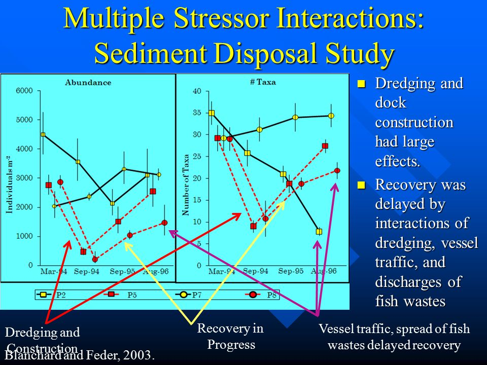 Multiple Stressor Interactions: Sediment Disposal Study Dredging and dock construction had large effects.
