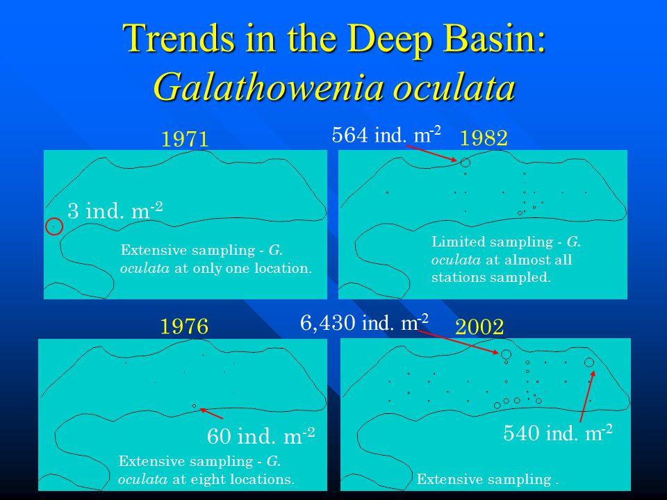 Trends in the Deep Basin: Galathowenia oculata 6,430 ind. m -2 564 ind. m -2 60 ind. m -2 3 ind. m -2 2002 1982 1976 1971 Limited sampling - G. oculat