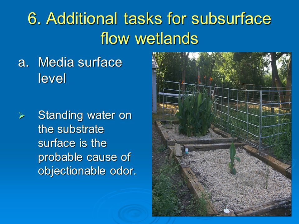 6. Additional tasks for subsurface flow wetlands a.Media surface level  Standing water on the substrate surface is the probable cause of objectionabl