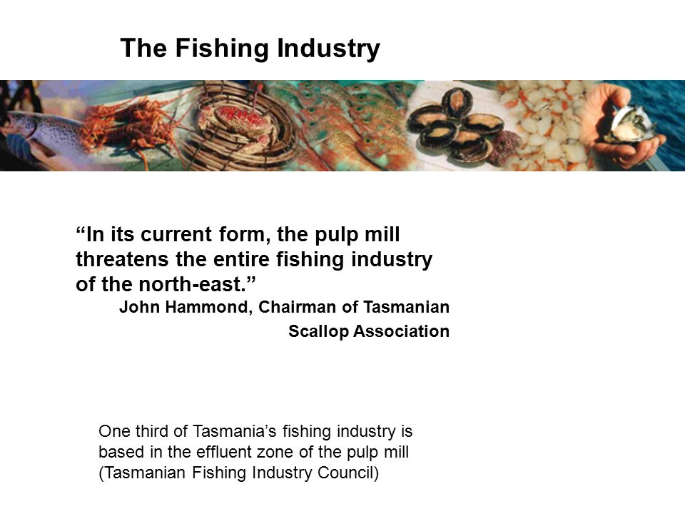 In its current form, the pulp mill threatens the entire fishing industry of the north-east. John Hammond, Chairman of Tasmanian Scallop Association The Fishing Industry One third of Tasmania's fishing industry is based in the effluent zone of the pulp mill (Tasmanian Fishing Industry Council)