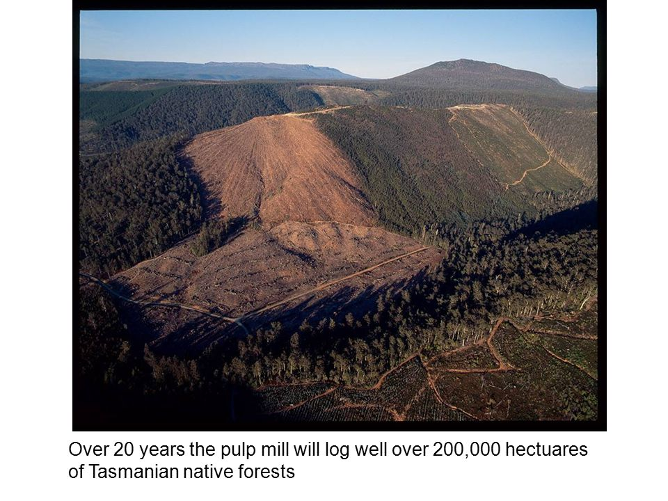 Over 20 years the pulp mill will log well over 200,000 hectuares of Tasmanian native forests