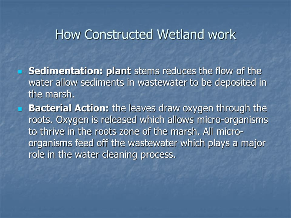 How Constructed Wetland work Sedimentation: plant stems reduces the flow of the water allow sediments in wastewater to be deposited in the marsh.